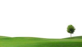field treen för green en Arkivbild