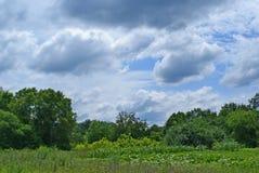 field treen Moln över skogen Arkivfoton