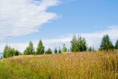 Field and trees Royalty Free Stock Images