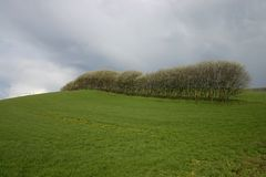 Field and trees. Field with rows of trees dramatic weather royalty free stock images