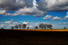 Field trees. Arable land shaded by trees and clouds Royalty Free Stock Photography