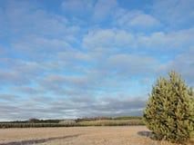 Field , trees and beautiful sky Stock Photos