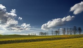 Field with trees and blue sky. Beautiful rural field with trees and blue sky Royalty Free Stock Image