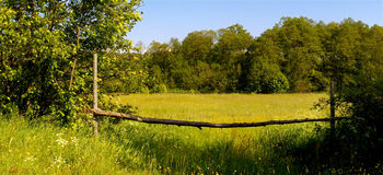 Field and trees conceptual image. Picture of green field in summer Stock Photography