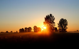Field with trees in dusk with sunset Royalty Free Stock Image