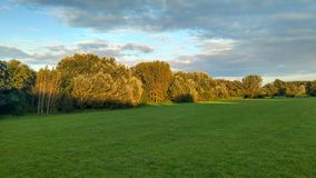 A field with trees royalty free stock image