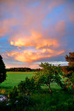 Field and trees in evening light Royalty Free Stock Photography