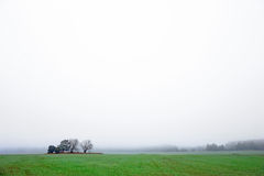 Field with  trees on foggy day Stock Photo