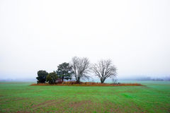 Field with  trees on foggy day Royalty Free Stock Photos