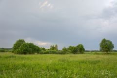 Field and trees immediately after the thunderstorm.  stock photography