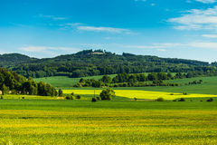 Field with trees and mountain behind royalty free stock images