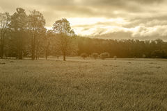 Field with trees in sepia tone wanderlust dreamscape scenery wit. H grassy terrain and morning sunrise in midwestern forest with copyspace Stock Image
