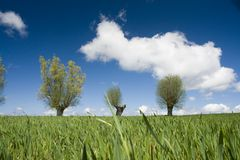 Field, Trees, Sky and Clouds. Green field of grasses or crops with three trees in background, blue sky and big fluffy white clouds Stock Image