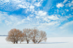 Field and trees in the snow and sky Royalty Free Stock Photos
