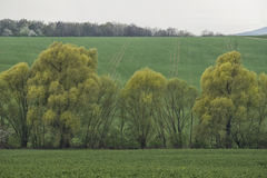 Field and the trees in the spring on the slope Royalty Free Stock Image