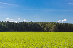 Field with trees Stock Photography