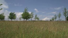 Field with trees on a sunny day. Blowing in the wind stock footage