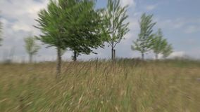 Field with trees on a sunny day. Blowing in the wind stock video footage