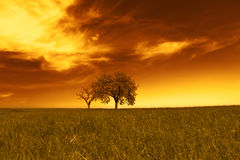 Field,trees,sunset Stock Images