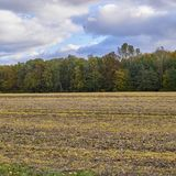 Field and trees under cloudy sky. Summer is gone, field and trees under cloudy sky Royalty Free Stock Photo