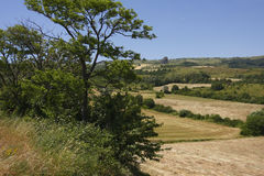 Field and trees. A view of harvested field. Italian Appennines Royalty Free Stock Images