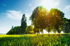 Field and trees Royalty Free Stock Photography