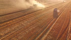 Field, truck and combine. Dust in the wheat field stock video