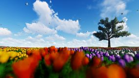 Field of tulips against blue sky with pigeons flying and old oak, 4K. Hd video stock video