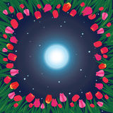 Field of tulips. Moon on the sky and field of tulips Stock Photo