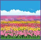 Field of tulips stock illustration