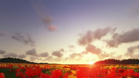 Field of Tulips, time lapse clouds at sunset stock illustration