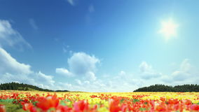 Field of Tulips, timelapse clouds. Field of Tulips, time lapse clouds stock video footage