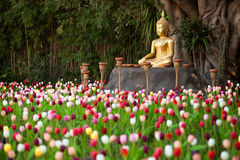 Field of tulips in Wat Phan Tao Stock Images