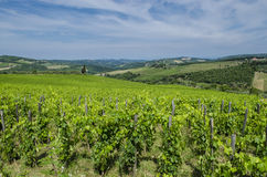 Field Tuscan vineyards Stock Photography
