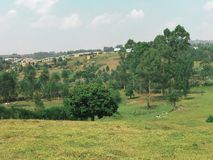 A field in Uganda royalty free stock image