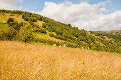 Field in the Ukrainian Carpathians Stock Images