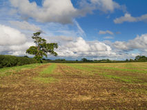 Field under a big sky Stock Photo