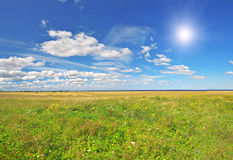 Field under blue cloudy sky whit sun Stock Image