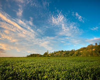 Field under the hill on sunset Royalty Free Stock Photos