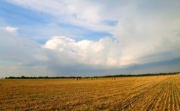 Field under the sky Stock Photos