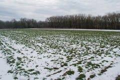 Field under snow Stock Photo