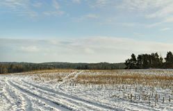 Field under snow. Stock Image