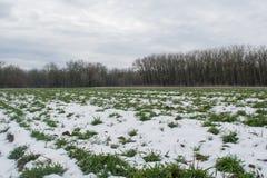 Field under snow in winter season Stock Photography