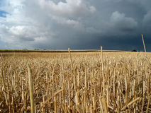 Field under storm. Field constrasting to upcoming storm Royalty Free Stock Photos