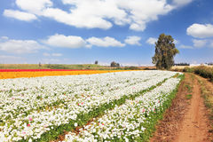 The field under yellow and white flowers. Royalty Free Stock Images