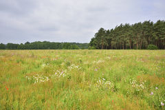 Field with useful plants Royalty Free Stock Photography