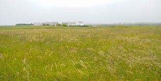 Field in Ushant or Oessant, Brittany France Royalty Free Stock Image