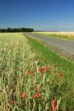 field vägen Royaltyfri Foto