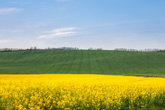 Field with vehicle tracks lines stock image