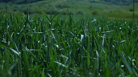Field view through the grass stock video